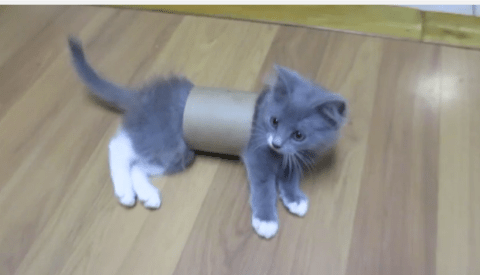 After Grumpy Cat, Lol Cats and Keyboard Cat, here come the TubeCats