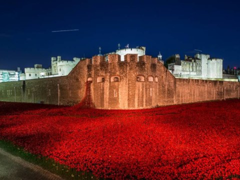 Remembrance Day: Tributes pour in as British Legion celebrate most successful Poppy Appeal ever