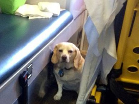 Buddy the dog rides on ambulance's bumper for 20 miles to accompany his owner to hospital