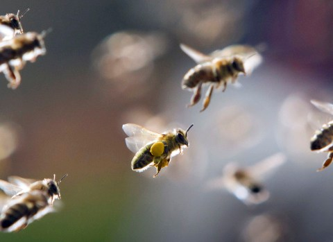 A man won a scientific award for getting bees to sting him five times a day