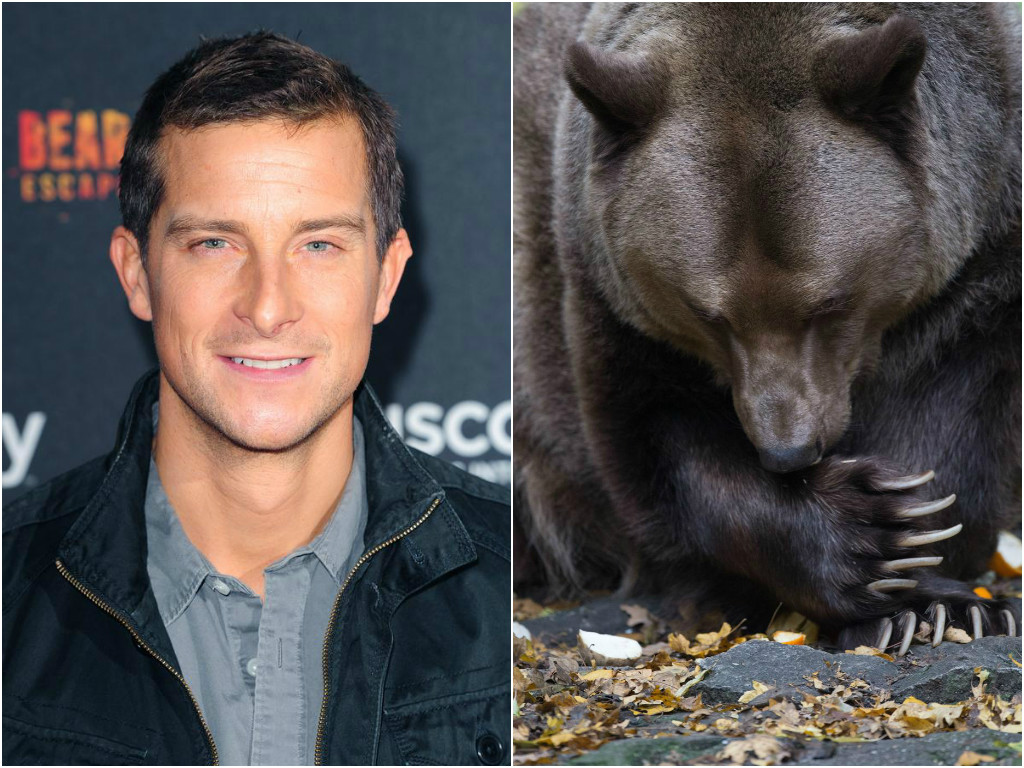 How much bear can Bear bear? Survivalist Grylls tells how he ate grizzly poo to survive
