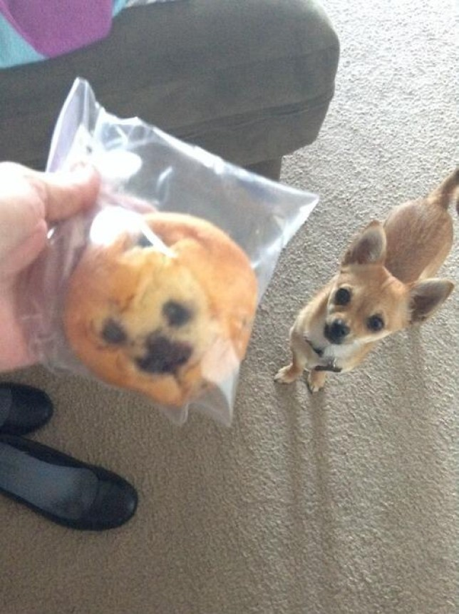 Muffin? Dog? (Picture: Twitter)