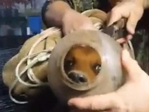 This puppy was trapped in a jug for two months