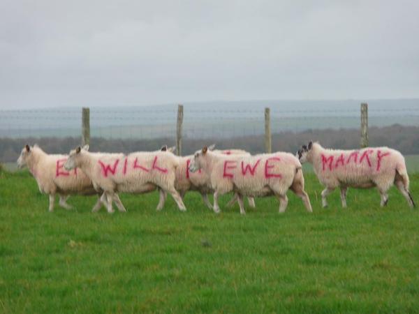 This farmer's marriage proposal was baaa-riliant