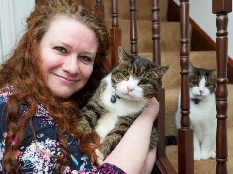Cat reunited with his owner after 12-year absence