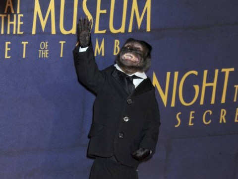 The Night At The Museum monkey just beat every red carpet outfit