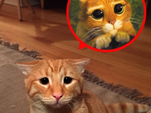 Copycat: Marty the cat looks just like Shrek's Puss In Boots