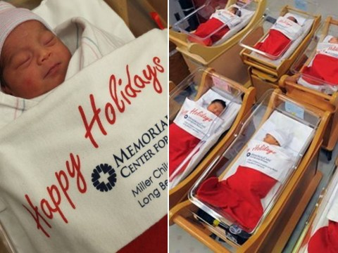 Newborn babies asleep in Christmas stockings is the cutest thing you'll see today