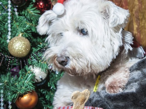 Christmas dinner ice cream for dogs is the ultimate dog's dinner