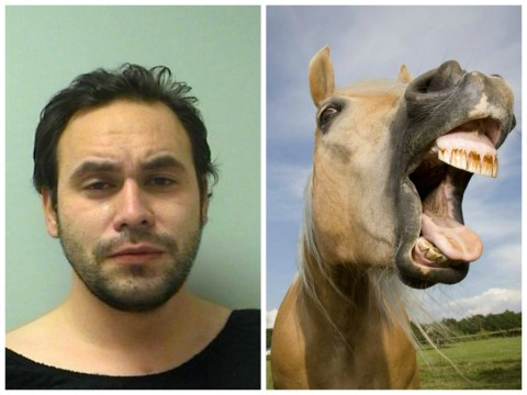 Man charged with possession of marijuana and giving horse a blow job