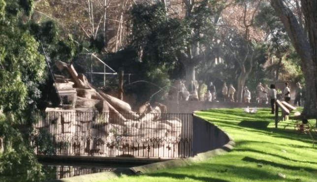The man voluntarily entered this Lion enclosure at Barcelona Zoo (Picture: Twitter)