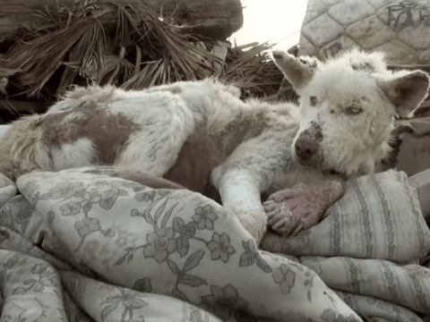 This rescue dog's transformation is incredible