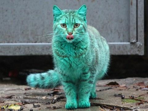 Wait a second… cats aren't green