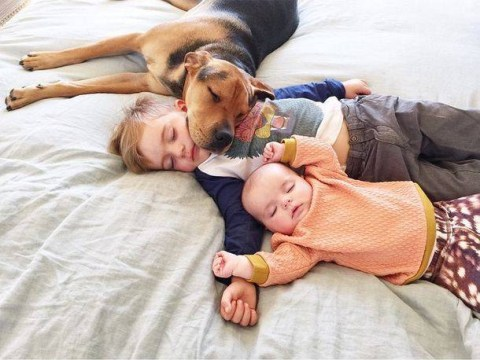 Beau, Evvie and Theo the dog know naptime's better with buddies