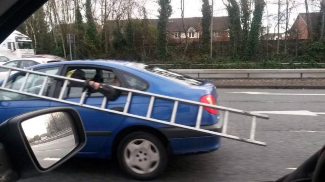 "This car passenger was prepared to go to great lengths to carry his ladders with him - so hung on to them through the WINDOW. See Ross Parry copy RPYLADDER :  The man, who was sitting in the back of a blue Nissan, clung on to the metal steps with his outstretched arm as he travelled on a busy dual carriageway at 50mph. Passing motorists couldn't believe what they were seeing as they witnessed the potentially catastrophic scene. Builder Steve Wignall, who caught the crazed antics on camera, said: ""Okay, it looks funny but I was a bit annoyed."