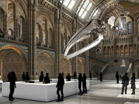 Don't save Dippy: Blue whales are better than dinosaurs anyway