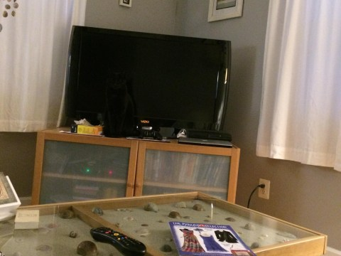 Can you find this woman's cat? She spent 10 mins looking for it before she realised…