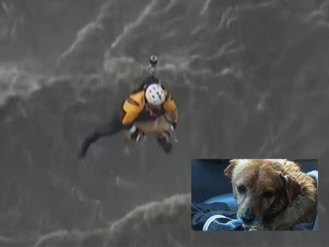 Dog saved from drowning in river by fire-fighters in daring helicopter rescue