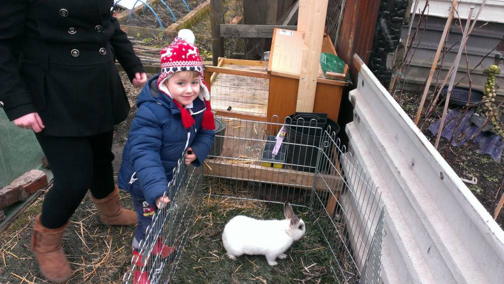Pictured -Tylor Anderson, with barney the rabbit. See South West copy SWRABBIT. TWO pet rabbits that were cruelly stolen along with their hutches from an allotment in Hartlepool have been returned to their rightful owners.  Barney and Tulip, who belonged to Jo and Aid Peel and their little grandson Tylor Anderson, aged four, were swiped from the plot at Thornhill Gardens Allotments some time over night from Tuesdsay, January 27, to Wednesday, January 28.  But an article about the theft in the Hartlepool Mail appears to have tugged at the thievesí heart strings and the gorgeous pets were returned.