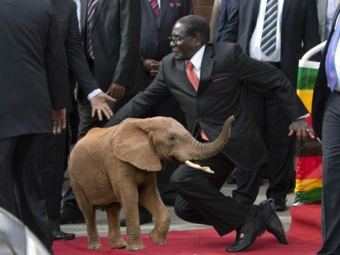 Mugabe to serve guests with elephant meat for his 91st birthday
