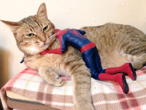 Here's Spider-Man being consoled by a giant cat