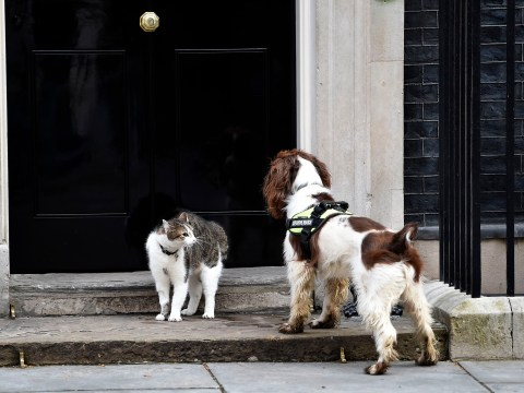They're scrapping like cats and dogs in Downing Street
