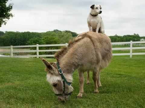 Animals riding animals will make everything better