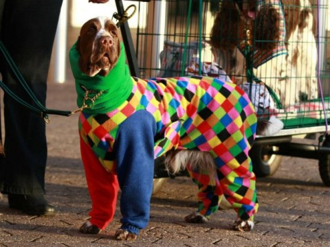 16 dogs who are better dressed than you are