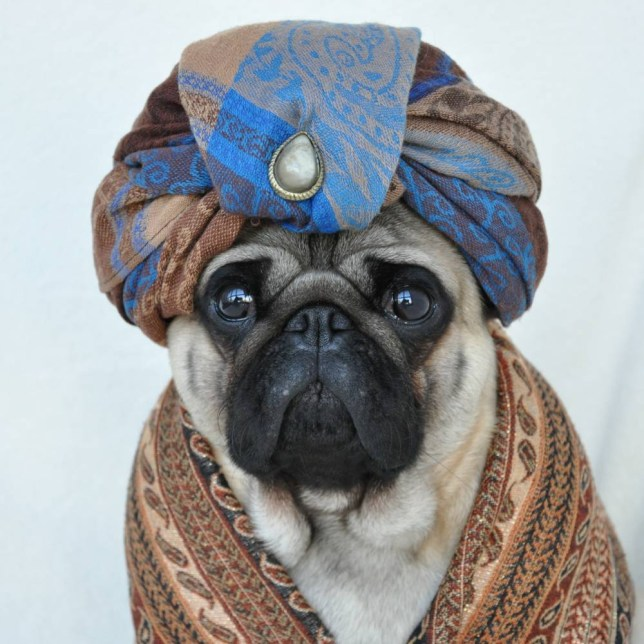 Image result for puppy turban