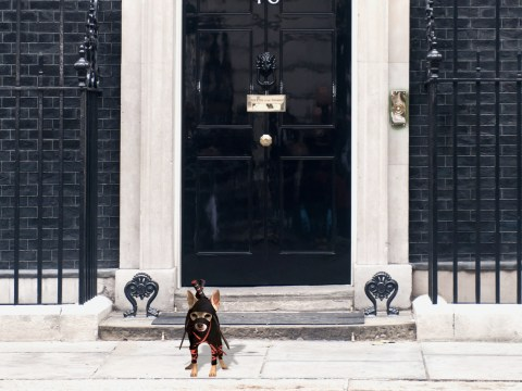 We'd rather have a fictional dog running the country than David Cameron or Ed Miliband