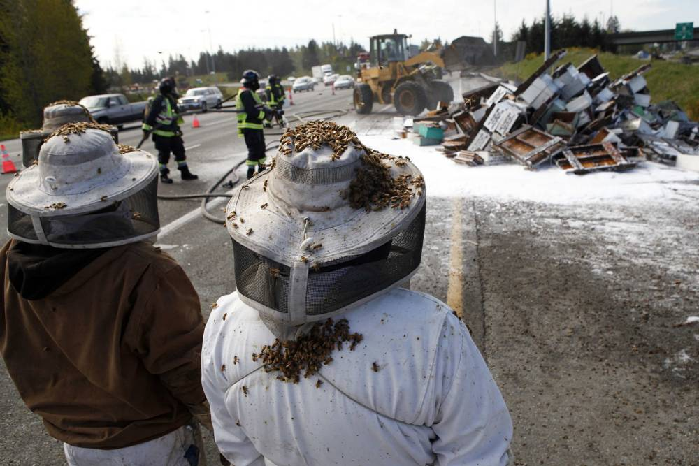 Millions of bees on the loose after lorry crash