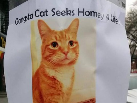 Foster cat puts out gangsta ad to find a 'homey 4 life'