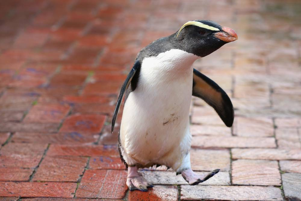 11 penguins that prove every day should be World Penguin Day