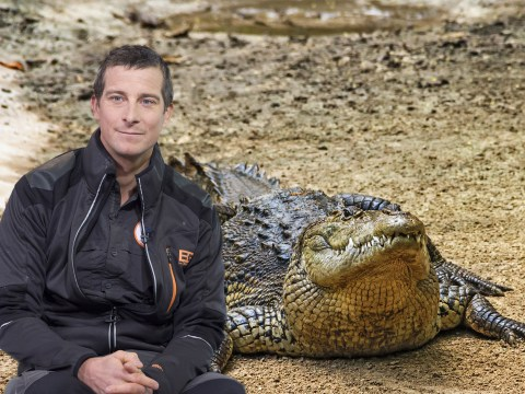 Channel 4 apologises after inhabitants of The Island With Bear Grylls accidentally eat 'protected' American crocodile