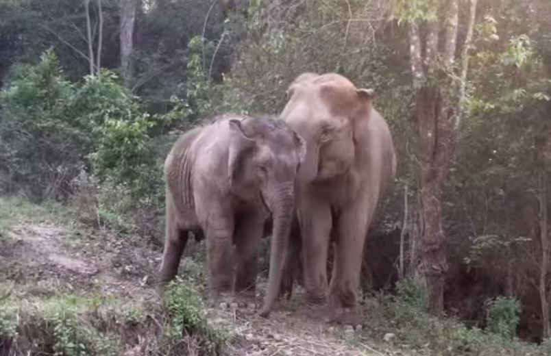 Elephant Nature Park/YouTube