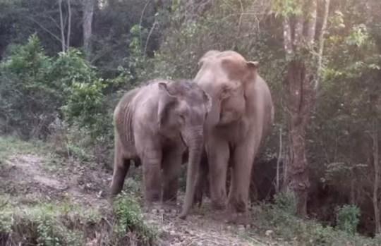 Elephant Nature Park/YouTube