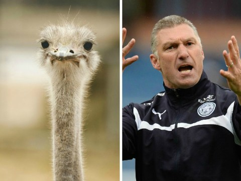 Leicster City boss Nigel Pearson loses his head with bizarre Ostrich rant at reporter
