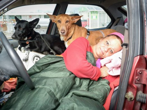 Teacher is living in her car in an Asda carpark because she won't give up her dogs