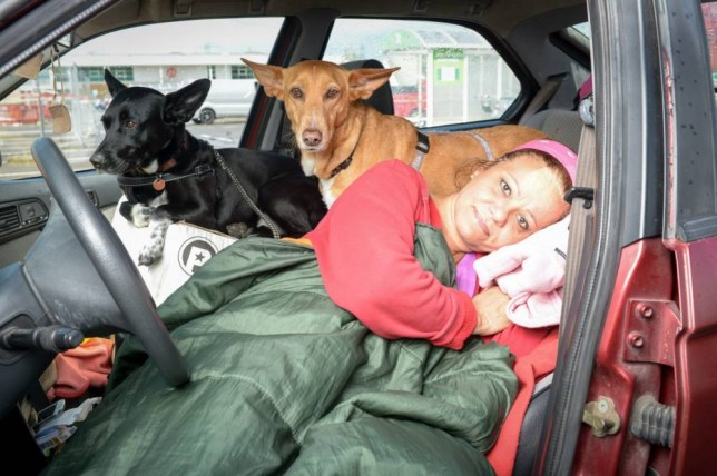 Hillary Burrows, 57, who lives in her car in a carpark in Canterbury. See SWNS story SWCAR; A penniless woman has been forced to live in her car in an Asda car park for the last four months ñ because she wonít give up her beloved DOGS. Hillary Barrows, 57, has spent the last 16 weeks living in her 20-year-old Alfa Romeo, after she was refused emergency council accommodation because she would not give up her two dogs Robbie and Cleo. Hillary, who was born in Streatham, London, returned to Kent in January after eight years living and working as a teacher in Europe. During her time away, she worked as an English teacher in Italy, Spain and France.