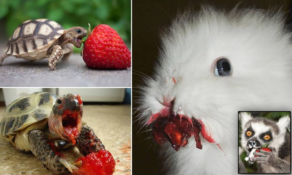 Who knew that cute animals eating berries could look so TERRIFYING?
