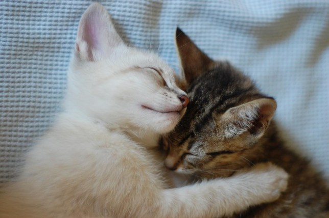 Close up of kittens cuddling on blanket