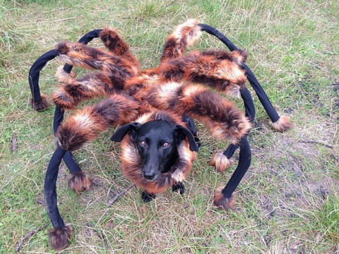 Watch out – Spider Dog is coming back to scare the living daylights out of you