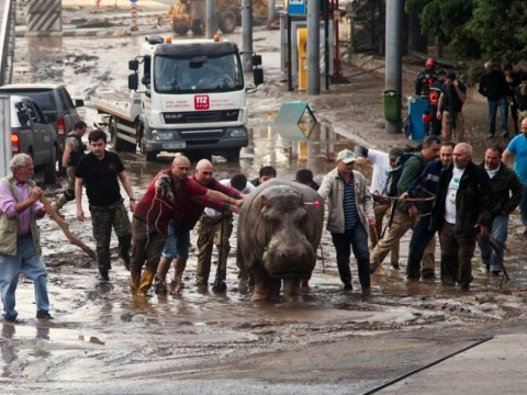 Dangerous animals on the loose after Tbilisi zoo flood
