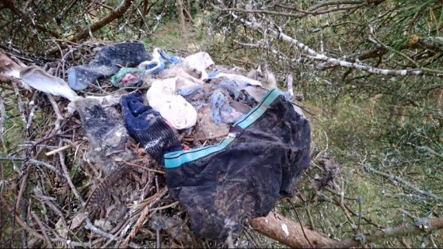 The red kites built a nest from pants and socks (Picture: Cascade)