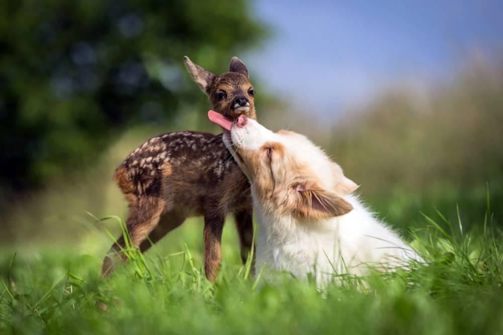 Consider, that how long do deer licks last theme, interesting