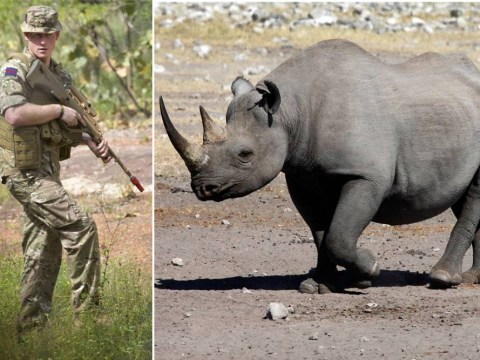 Prince Harry has joined the fight against ivory hunters in Namibia