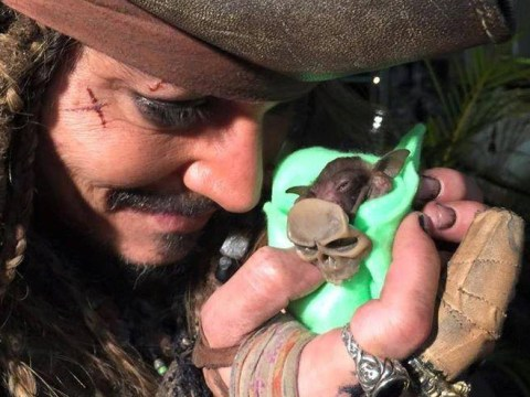 Johnny Depp bottle feeding a baby bat dressed as Jack Sparrow is the cutest thing you'll see all day