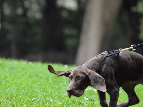 The 19 things you probably shouldn't say to a dog owner