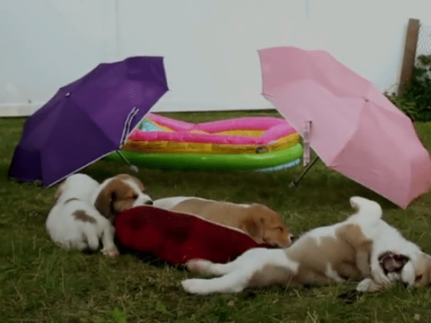 Finally someone has remade Friends…with puppies