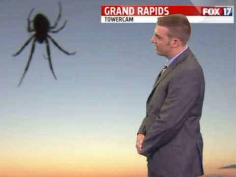 Spider rudely interrupts weatherman by catching its breakfast mid-broadcast